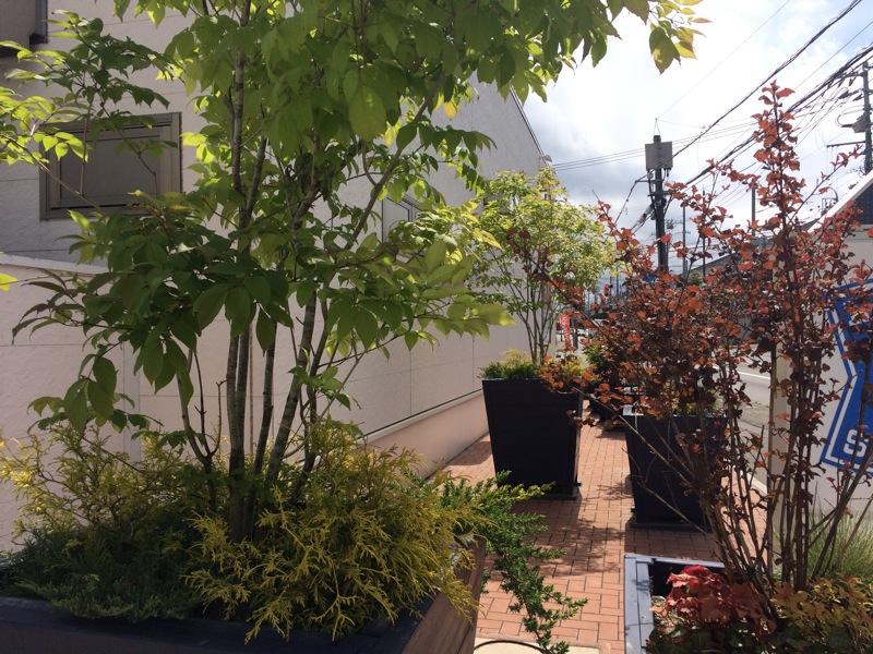 ポット、植木鉢、特大、大型、ブルー、青、超大型、樹木、植栽